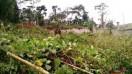 Terrain à Yaoundé
