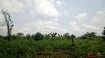 Terrain agricole à vendre